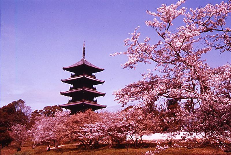 備中国分寺桜